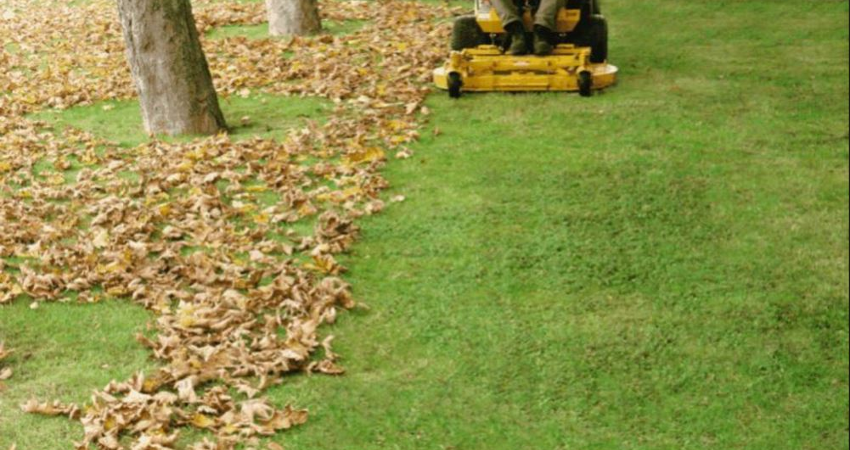 spring / fall clean-up | beauty-landscape
